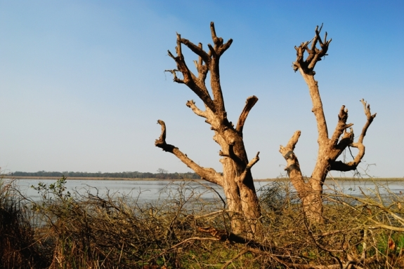 Dry Trees by a Lake