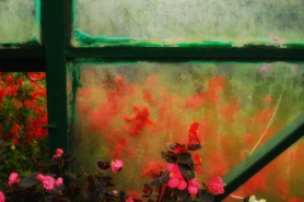 Frosted Window with Flowers