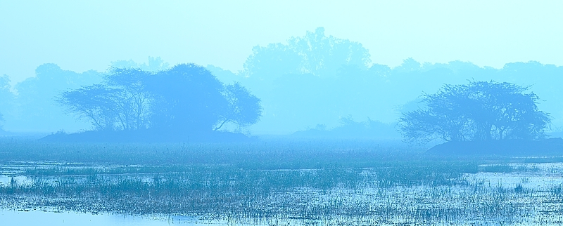 Fog on a marsh