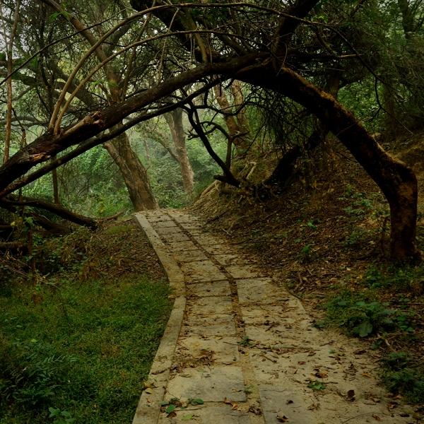 Dark Pathway