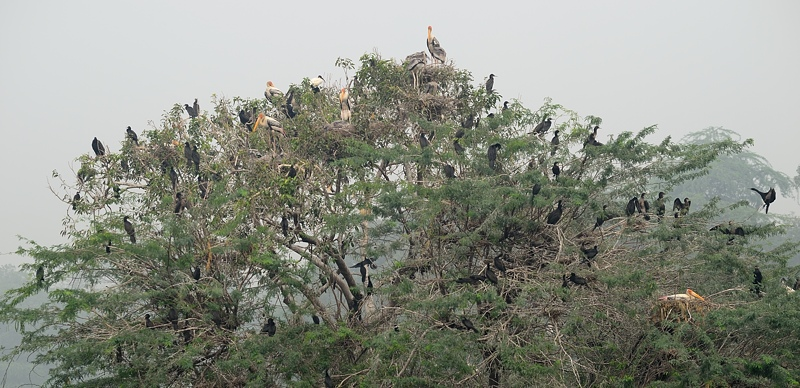 Birds on Tree