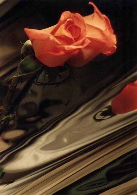 Rose on Mylar