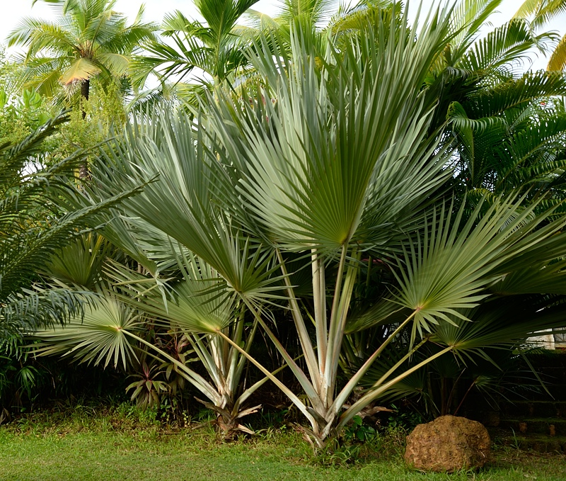 Palm leaves which were in front of me