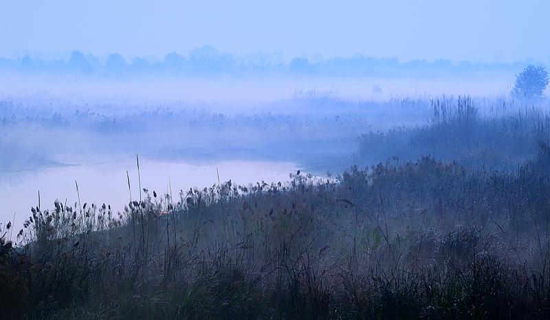 Fog in golden hour