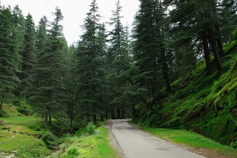 Road to Jageshwar