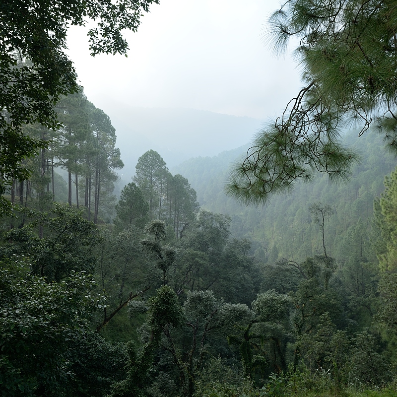 View of the forest