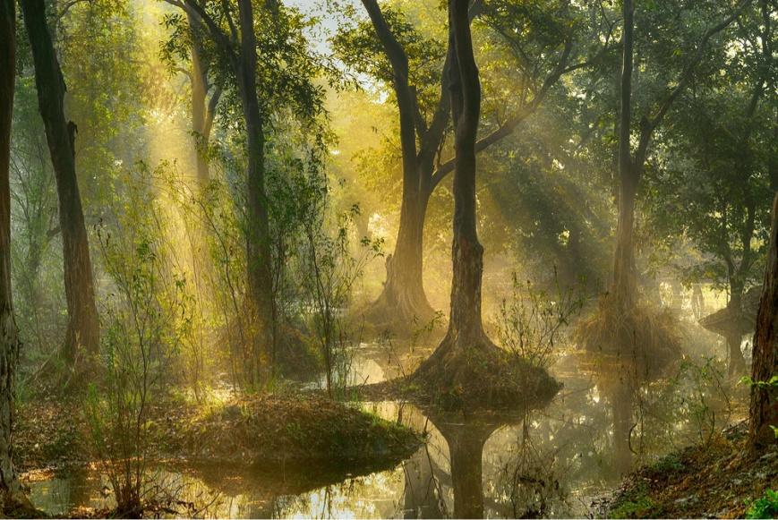 Sunrays in Marsh