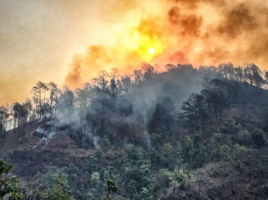 Forest Fire near Bhimtal
