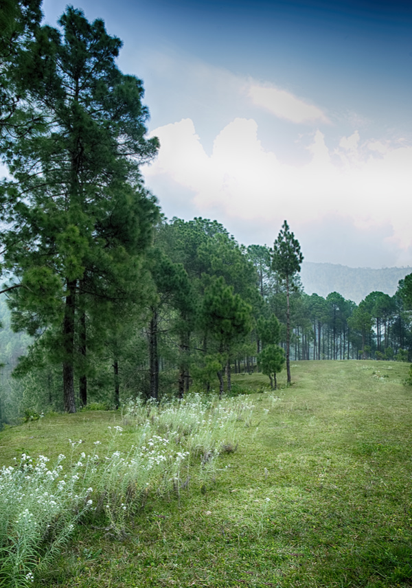 Pasture in the forest