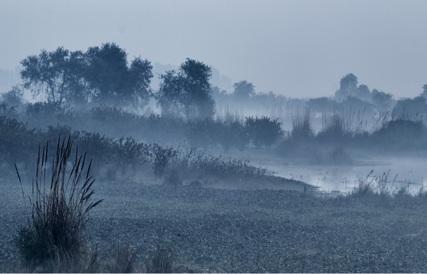 Marsh and Fog
