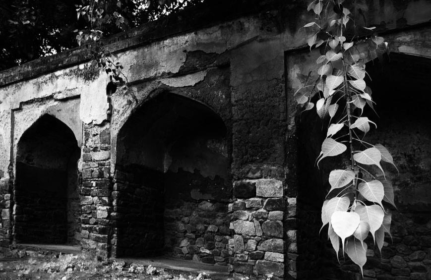 Peepal and Ruins
