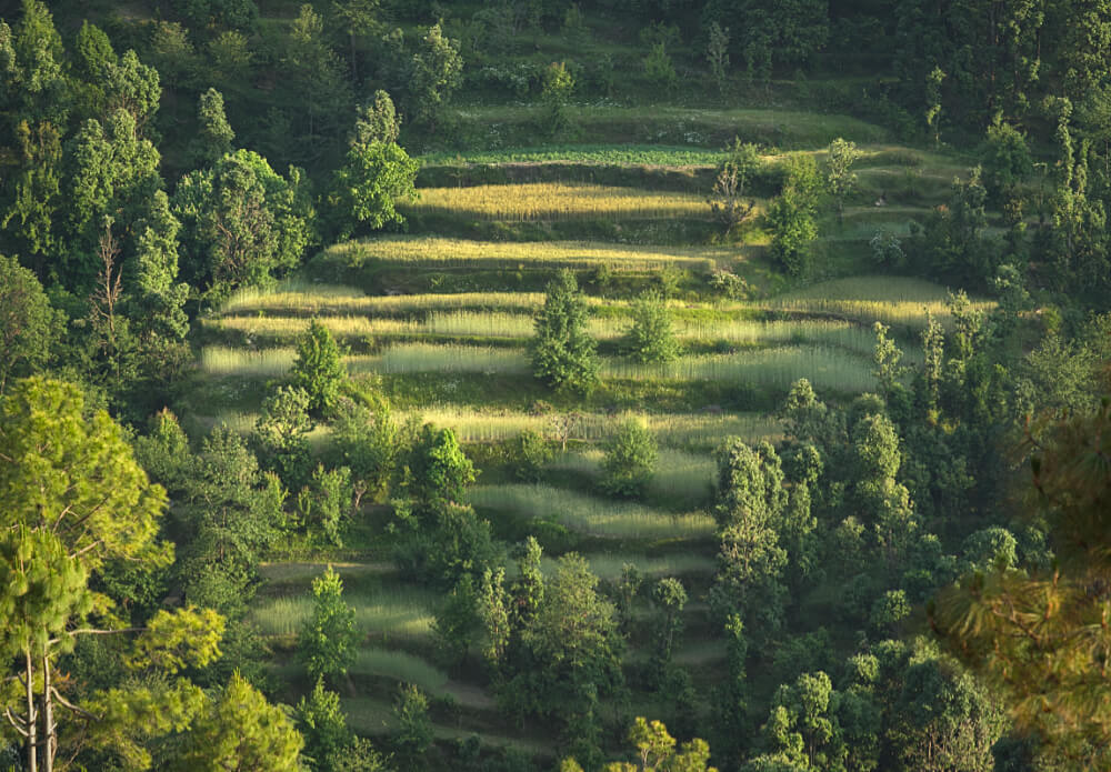 Terrace Farms